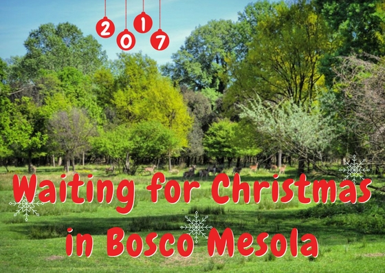 Waiting for Christmas 2017 in Bosco Mesola